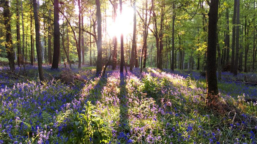 Bagley Wood, Oxford
