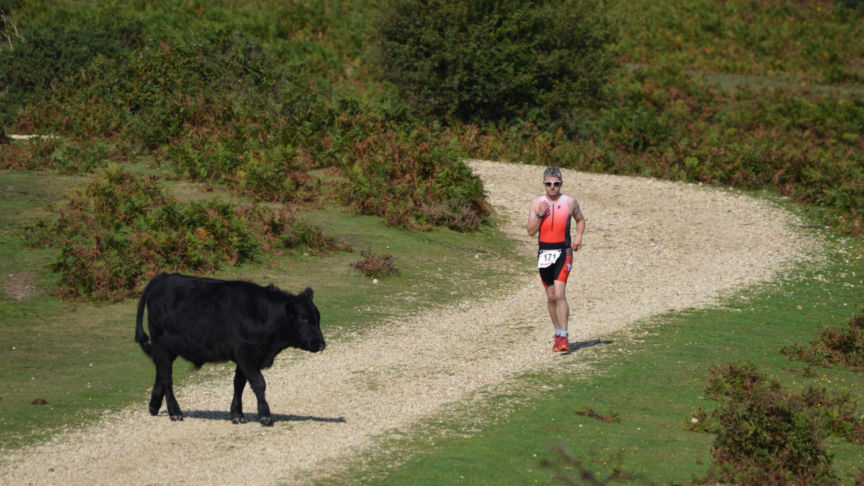 Race New Forest